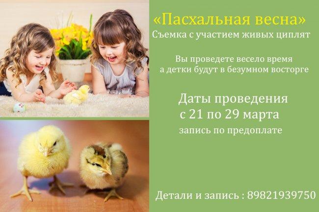 Фотосессия с участие живых цыплят