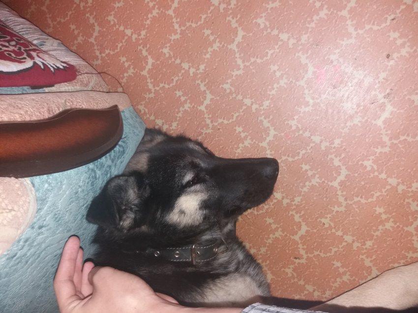 Найдена собака. Ищем владельца. Или того кто приютит