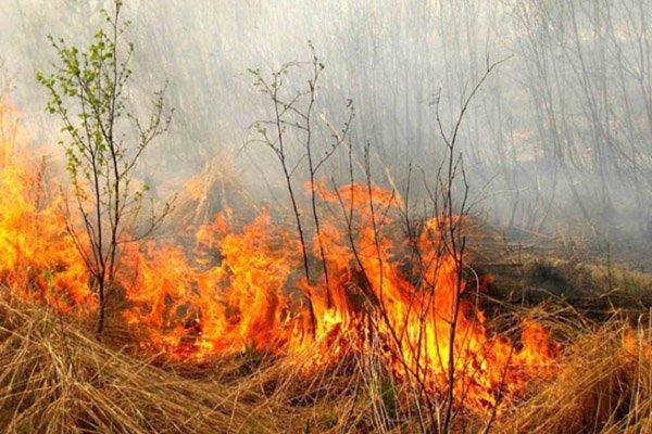 Опасность и вред весенних палов сухой травы.